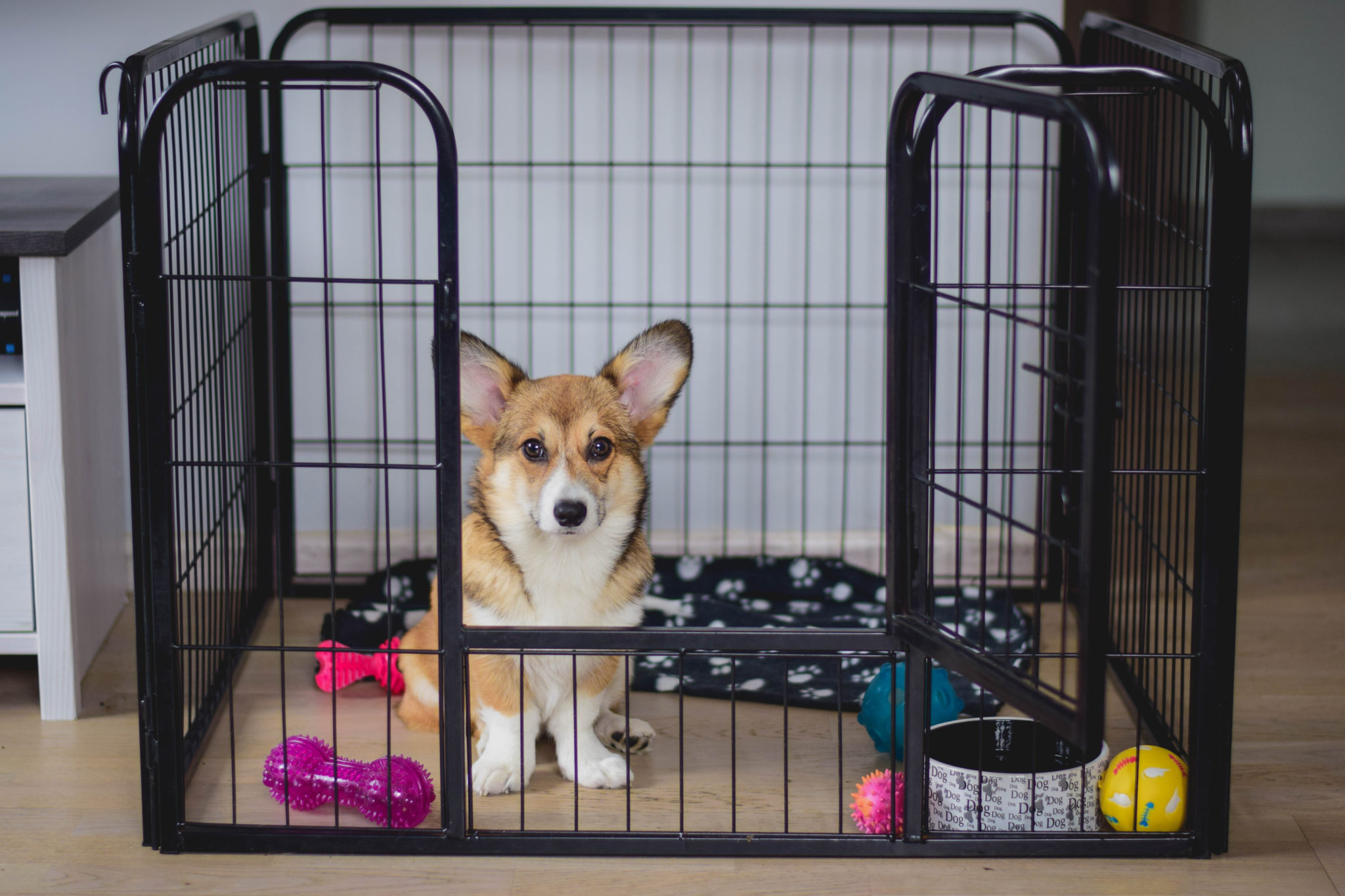 Easy Clean Dog Crate Review